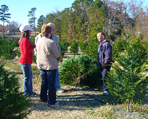 choose and cut a fresh christmas tree at a reasonable price reasonable prices for fresh - Cheap Real Christmas Trees For Sale