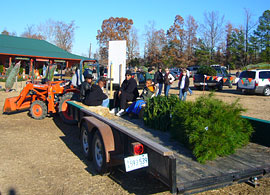 Select the perfect tree and let us help you bring it back, shake it, bale it, and load it on your car, at Motley's Christmas Tree Farm in Little Rock, Arkansas